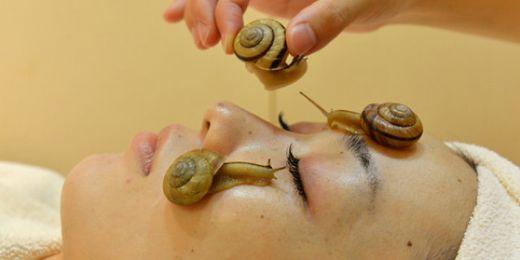 Deri üzerinde molusks